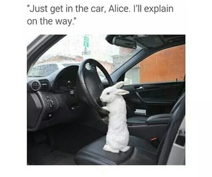 alice in wonderland, funny, and lol image
