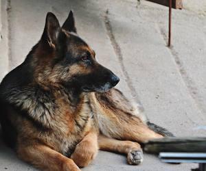 animal, photography, and dog image