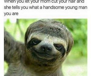 funny, animal, and hair image