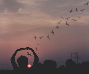 bird, sunset, and indie image