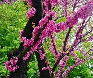 blossoms, flowers, and Vert image