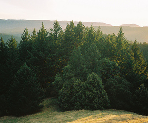 earth, trees, and view image