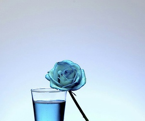 blue, flower, and fresh image