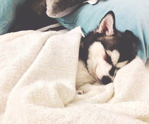 adorable, puppy, and sleeping image