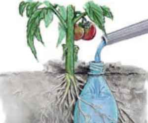bottle, diy, and garden image