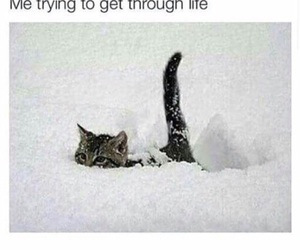 life, cat, and funny image
