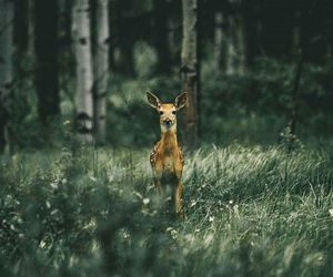 deer, wild, and nature image