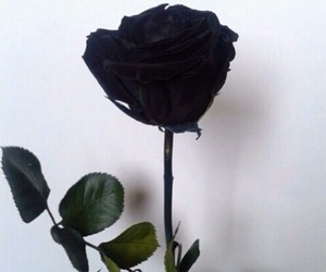 black, rose, and flowers image