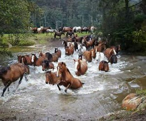 forest, free, and horses image