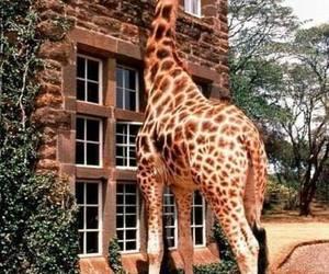 giraffe, home, and people image