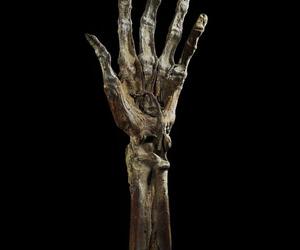 mummified hand image