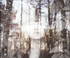forest, double exposure, and photography image