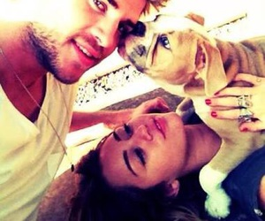 miley cyrus, dog, and liam hemsworth image