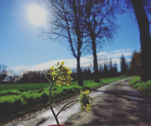 campagne, Fleurs, and nature image