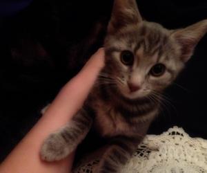 cat, cute, and simba image
