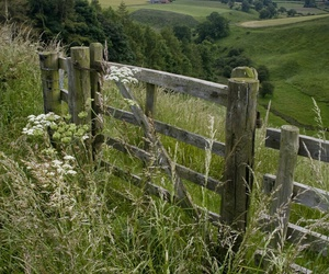 countryside, fence, and flower image