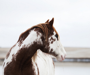horses, inspiration, and perfect image
