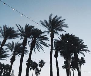 coachella and palm trees image