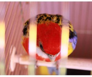 bird, cage, and parrot image
