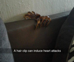 funny, spider, and humor image