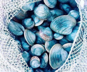blue, shell, and beach image