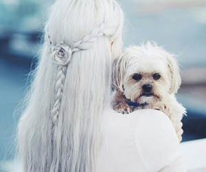 hair, dog, and cute image