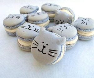 cat, food, and ‎macarons image