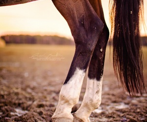 back, horse, and horses image