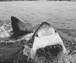 shark, black and white, and water image
