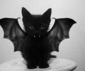 black, demon, and pussy image