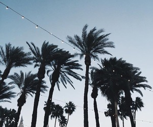coachella and palm trees image
