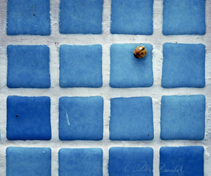 blue, animal, and photography image