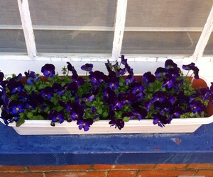 blue, flowerbox, and purple image