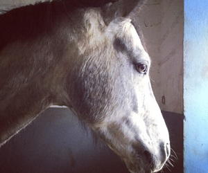 mon amour and mon cheval image