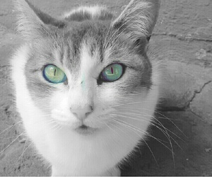 cats, Gatos, and verde image