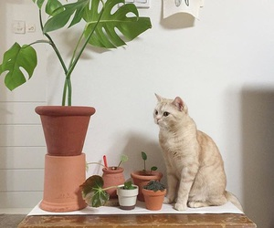 animal, cat, and plants image