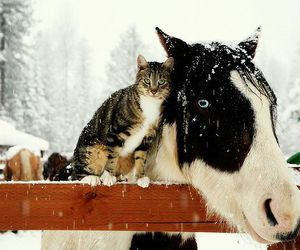 cat, horse, and animal image