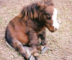 horse, pony, and animal image