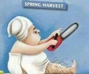 funny, lol, and spring image