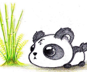 adorable and panda image