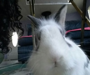 bunny, cute, and curly image