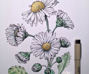 flowers, daisy, and drawing image
