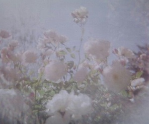 flowers, pale, and aesthetic image