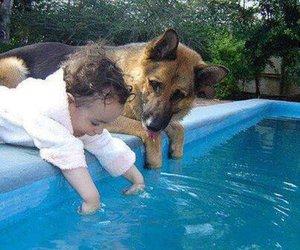 dog, baby, and pool image