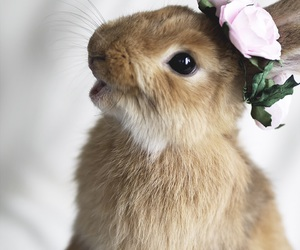 cute and rabbit image