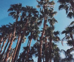 coachella, palm trees, and festival image