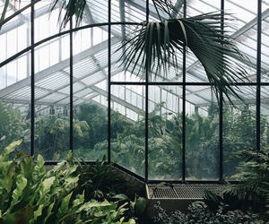 greenhouse, grunge, and plants image