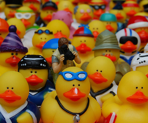 rubber ducks image