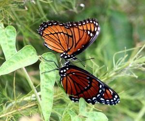 beautiful, fauna, and flora image