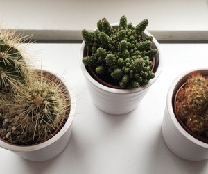 cactus, home, and inspo image
